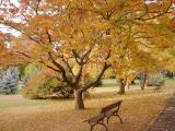 秋のホバート